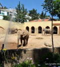 chocapic_zoo14