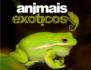 animais_exoticos
