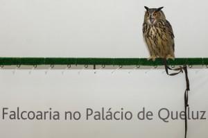 Falcoaria4_Credits_PedroYglesias_PSML