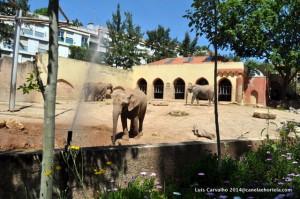 chocapic_zoo14