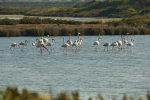 Flamingos_creditos Helio Ramos