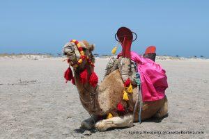 tunisia4_7221