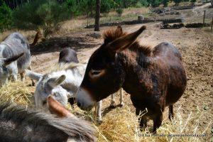 reserva_burros_sintra-025
